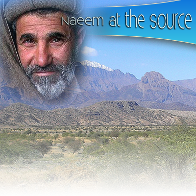 LZ Episode 002: Naeem at the Source, a Visionary Journey